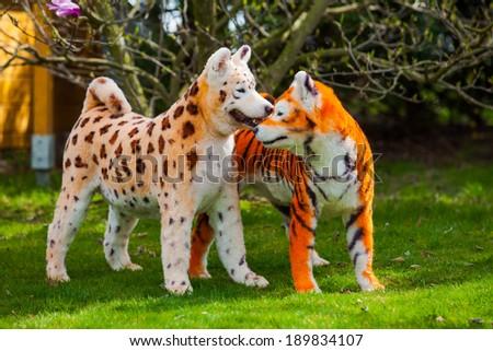 samoyed  dog repainted on leopard and tiger.  groomed dog. pet grooming. Samoyed dog - stock photo