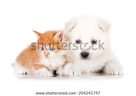 Samoyed puppy with little red kitten with blue eyes - stock photo