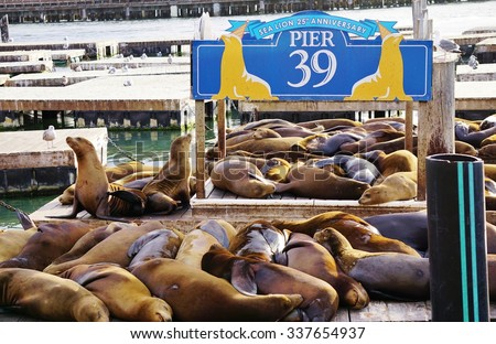 SAN FRANCISCO, CA -3 SEPTEMBER 2015- The iconic sea lions at Pier 39 in San Francisco on the bay facing Alcatraz have been a major tourist attraction for 25 years. - stock photo