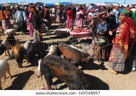 SAN FRANCISCO DEL ALTO, GUATEMALA -  NOVEMBER 29: animals vendors are wearing  traditional colored clothes at the market , on November 29, 2013, in San Francisco Del Alto, Guatemala.  - stock photo