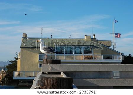 San Francisco marina and sea gull - stock photo