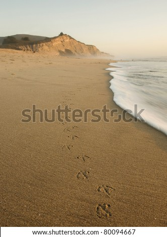 San Gregorio Beach and cliffs, California State Beach and Wildlife Preserve, with bird tracks at sunset - stock photo