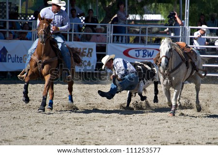 SAN JUAN CAPISTRANO, CA - AUGUST 25: unidentified cowboy competes in the steer wrestling event at the PRCA Rancho Mission Viejo rodeo in San Juan Capistrano, CA on August 25, 2012. - stock photo