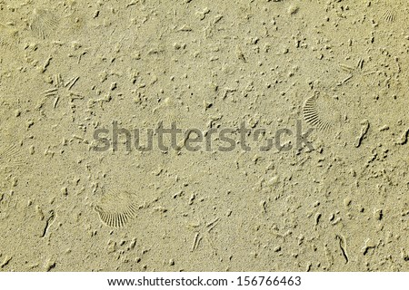 Sand and sea shell fossil texture ideal for a sea fish or beach themed background - stock photo