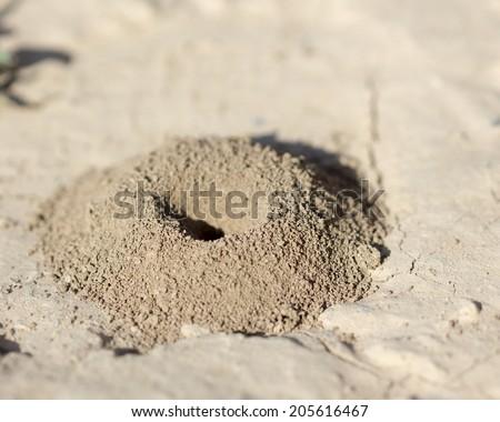 Sand anthill in the desert - stock photo