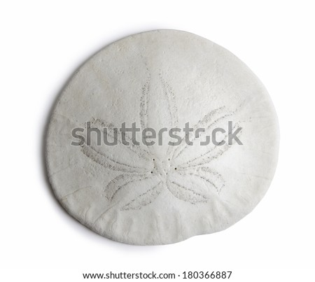 sand dollar - stock photo