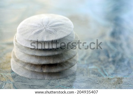 Sand Dollar animal sea shell in a circular shape. - stock photo