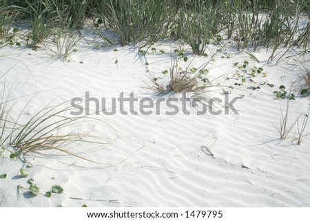 Sand Dune with Sea Oats and grasses - stock photo