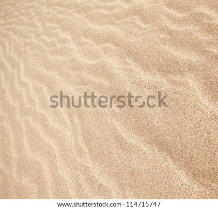 sand dunes in the background - stock photo