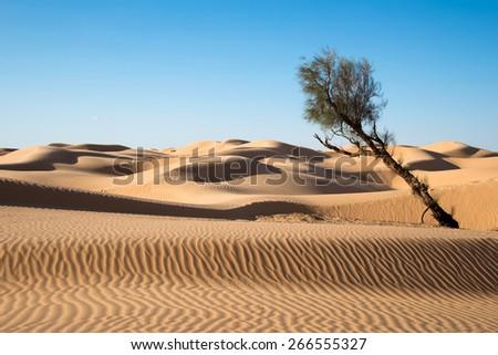 Sand dunes in the desert of Sahara, South Tunisia - stock photo