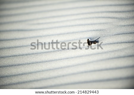 Sand dunes in the Nambung National Park in Western Australia - stock photo