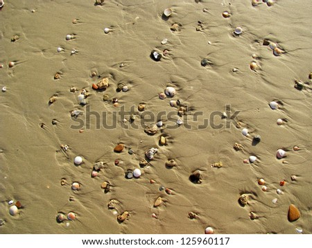 Sand texture with sea shells - stock photo