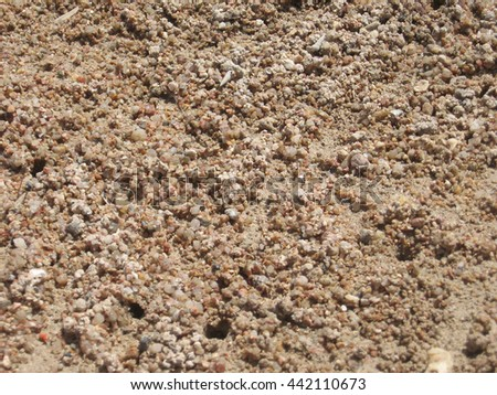 Sand with shells and burrows of crabs in the background - stock photo