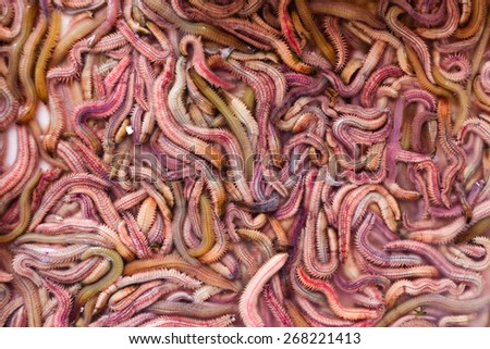 Sand worms in Vietnamese market, ingredient for local traditional food - stock photo