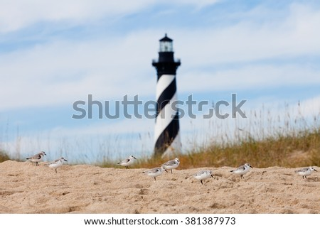 Sanderlings, Calidris alba, shore birds with Cape Hatteras Lighthouse behind dunes of Outer Banks island near Buxton, North Carolina, US - stock photo