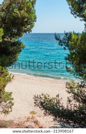 Sandy beach seen through pine trees - stock photo