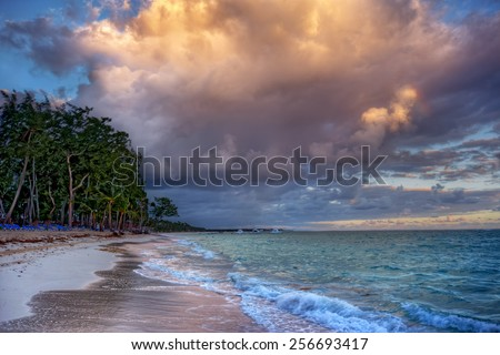 Sandy beach with grove of trees - stock photo