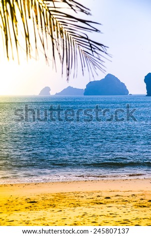 Sandy beach with ocean and rocks in distance, silhouette of palm tree in the forefront - stock photo