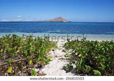 Sandy path to ocean beach, through grassy sand dunes, Kanawa island - stock photo