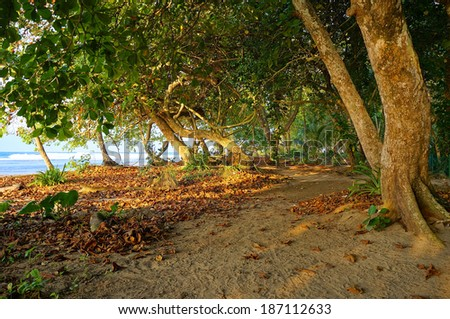 Sandy path under trees along the tropical coast with sunlight through the foliage, natural scene, Caribbean, Puerto Viejo, Costa Rica - stock photo