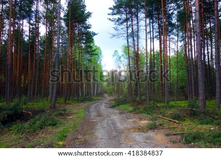sandy road by pine forest  - stock photo
