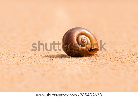 Sandy snail at sunset - stock photo