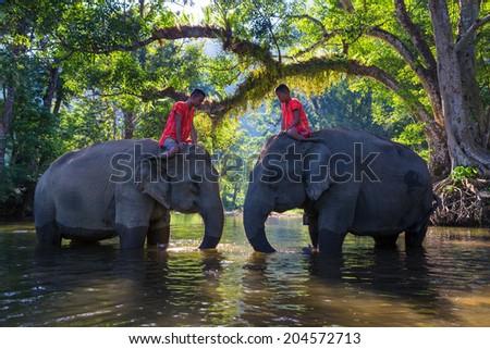 SANGKHLABURI , KANJANABURI, THAILAND-MARCH 23 : An unidentified man shows how to bathe an elephant in a river show in Sangkhlaburi, Kanjanaburi, Thailand on MARCH 23, 2013 - stock photo