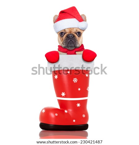 santa christmas dog in a red boot, isolated on white background - stock photo