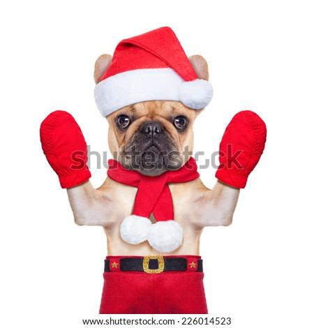santa claus christmas dog  isolated on white background, waving hands - stock photo