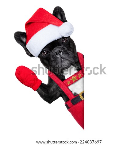 Santa claus christmas dog wearing a hat , besides a white or blank placard, isolated on white background - stock photo