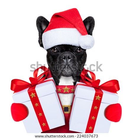 Santa claus christmas dog wearing a hat with a  xmas gift or present for you - stock photo