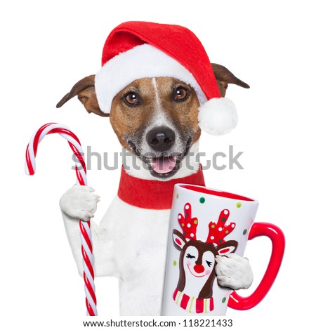 santa claus dog with sugar cane and cup - stock photo