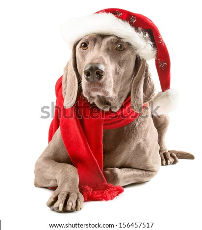 Santa dog isolated on white background - stock photo