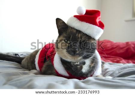 Santa Paws - stock photo