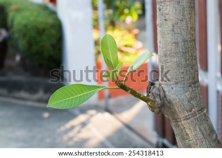 sapling - stock photo
