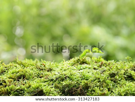 Sapling growing on a moss-green with background sun shining. - stock photo