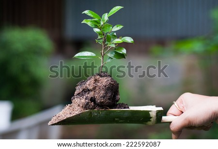 sapling in bamboo relate - stock photo