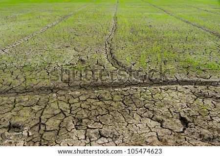 Sapling in the dry mud. - stock photo