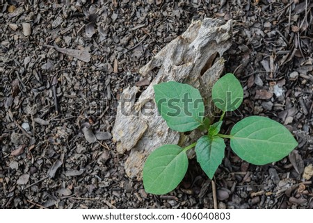 Sapling on the top soil - stock photo