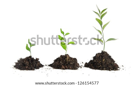 Saplings on white background - stock photo