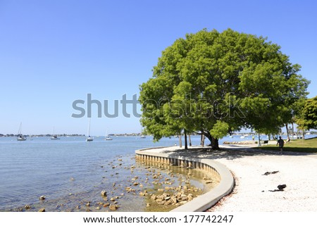 SARASOTA, FLORIDA - MAY 9, 2013: Nice view of a people relaxing on a walkway and very large tree in Sarasota Island Park and Marina with many boats out in Sarasota harbor on a sunny day.  - stock photo