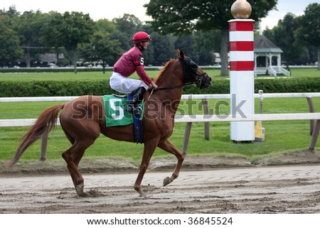"""SARATOGA SPRINGS, NY- SEPT 5: """"Elder Statesman"""" with Jamie Theriot aboard in the in the post parade for the 6th race at Saratoga Race Track, September 5, 2009 in Saratoga Springs, NY. - stock photo"""