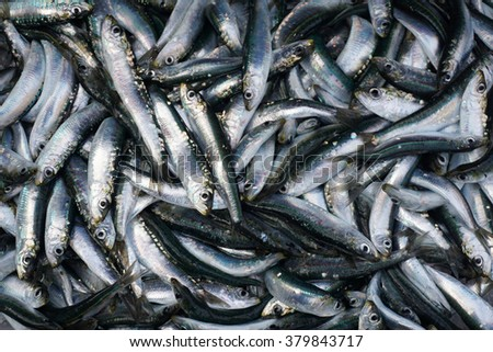 Sardela fish background - stock photo