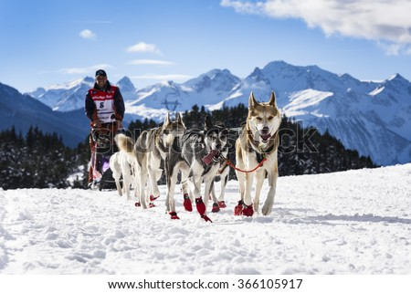 SARDIERES VANOISE, FRANCE - JANUARY 20 2016 - the GRANDE ODYSSEE the hardest mushers race in savoie Mont-Blanc, Andreas Kraft, germanic musher, Vanoise, Alps - stock photo