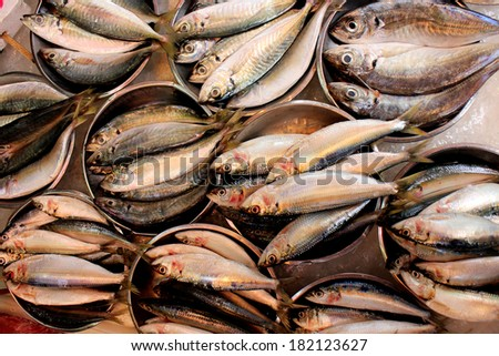 Sardines in metal plates on a fish market - stock photo