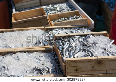 Sardines recently landed at fishing port docks, packed with ice and ready for sale fish market, fish mongers and supermarkets - stock photo