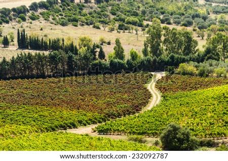 Sardinian Vineyard - stock photo