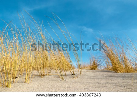 Saturated dry grass on the sandy beach at wonderful sunny day - stock photo