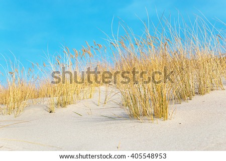 Saturated dry yellow grass on the sandy beach at wonderful sunny day - stock photo