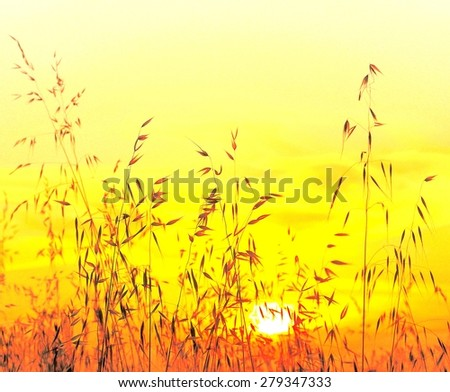 Saturated image of oat field at sunrise - stock photo